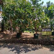 Tanah Kavling Banyumanik Di Perumahan Semi Cluster (23823183) di Kota Semarang