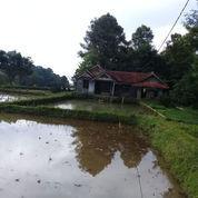 Tanah Sawah 7000 M2 Di Kawasan Villa Daerah Dingin Purwakarta (23866551) di Kab. Purwakarta