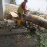 Jasa Potong Pohon Wa 081903627999 (23909819) di Kota Jakarta Timur