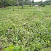 Tanah Kebun Murah Di Lombok Utara (24015563) di Kab. Lombok Utara
