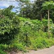 Tanah Murah 300m2 Jl Kaliurang Km 8,5 Sleman Yogyakarta