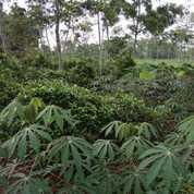 Tanah Kebun 1592 M2 Akses Mobil Di Bojong Purwakarta (24104367) di Kab. Purwakarta