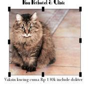 Vaksin Kucing Cuma 140rb (24130415) di Kota Surabaya