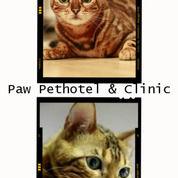 Medical Checkup Kucing Cuma 50rb (24130451) di Kota Surabaya