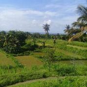 Tanah Sawah Siap Pakai Di Kayangan Lombok Utara (24155431) di Kab. Lombok Utara