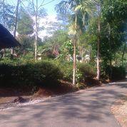 Lahan Kebun Luas 3500 M2 Di Perkampungan Daerah Dingin (24251487) di Kab. Purwakarta
