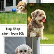 Dogshop Cuma 10rb (24532007) di Kota Surabaya