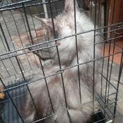 Buruan Beli Kucing Ini Harganya 800 Rb Bisa Nego Kok :)