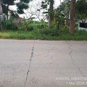 Tanah Gabus Wetan Indramayu (24889283) di Sindang
