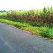 Tanah Bejijong Mojokerto (25282619) di Kab. Mojokerto