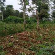 Tanah Murah Di Jami Desa Sukajaya, Tamansari Bogor