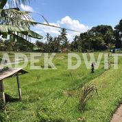 Tanah View Sawah Kedisan Kenderan Tegalalang Ubud Bali (25679523) di Kab. Gianyar