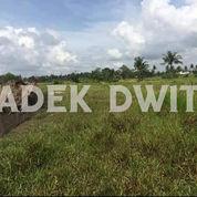 Tanah View Sawah Singakerta Tebongkang Ubud Bali (25679851) di Kab. Gianyar