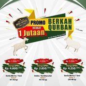 Domba Berkah - Promo Berkah 1 Jutaan (25771639) di Kota Bogor