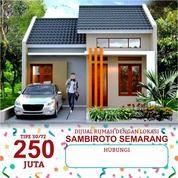Sambiroto - Kota Semarang 250 Juta (25803955) di Kota Semarang