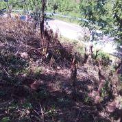 Tanah Nol Jalan Provinsi Trans Flores Labuan Bajo Manggarai Barat NTT (26099459) di Kab. Manggarai Barat