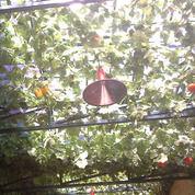 Lampu Gantung Orange (26111571) di Kota Bogor