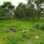Tanah 3500 Meter Jl. Nasional Bunar Kec. Cigudeg Bogor Jawa Barat 16660 (26160583) di Kab. Bogor