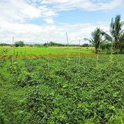Tanah 6 Ha Desa Ciherang Kec. Dramaga Bogor Jawa Barat (26191387) di Kab. Bogor