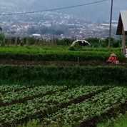 Tanah Murah Strategis Cocok Untuk Hunian Atau Tempat Usaha Di Karangploso Malang (26192079) di Kota Malang