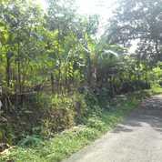 Tanah 3000 Meter Lahan Peternakan Sudah Ada Kandang 3 Unit Leuwisadeng Bogor (26332619) di Kab. Bogor