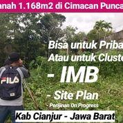 Tanah Puncak 1.168m2 Untuk Clutser Atau Pribadi Di Cimacan Cianjur Jawa Barat (26357471) di Kab. Cianjur