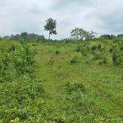 Tanah 1,5 Ha (15,000 Meter) Desa Tegal Wangi Kec Jasinga Kab Bogor (26357859) di Kab. Bogor