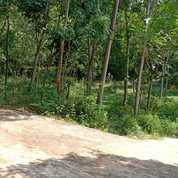 Tanah 900m2 Cocok Kebun Buah Kerjo, Karanganyar (26370367) di Kab. Karanganyar