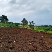 Tanah Kavling 75 Jutaan Kota Batu Free SHM (26472887) di Kota Batu