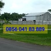 Gudang Selep, Mesin, Dan Tanah Produktif (26585163) di Kab. Lamongan