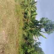 Tanah Dan Gudang Di Bekasi Kota Lokasi Strategis Harga Murah (26599675) di Kota Bekasi