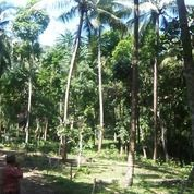 Tanah Murah Di Batu Layar Lombok Barat (26646751) di Kab. Lombok Barat