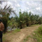 Tanah Cocok Untuk Inves (26684039) di Kab. Labuhanbatu Utara