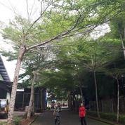 Gudang Bagus Siap Pakai Di Belakang BSD Tangerang (26706895) di Kota Tangerang