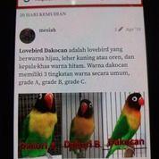 Lovebird Dawn MH Cowo N Cewe( BURUNG BABE/BUNDA ) (26710087) di Kota Jakarta Pusat