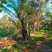 Tanah 5 Hektar Murah Donomulyo Malang (26712407) di Kab. Malang