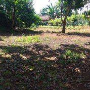 Tanah Kebun Murah Di Ciampea Bogor (26763175) di Kab. Bogor