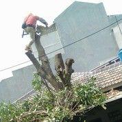 Sewa Mesin Gergaji Pohon Wa 081903627999 (26960059) di Kota Jakarta Pusat