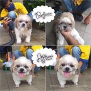 Salon / Grooming Anjing Kucing Sukabumi (26984583) di Kota Sukabumi