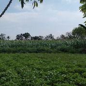 Tanah Luas - Murah - Prospek Bagus - Daerah Sejuk (26998991) di Kota Yogyakarta