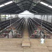 Peternakan Ayam Petelur Semi Permanen Modern Cianjur (27026659) di Kab. Cianjur
