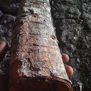Kayu Kesambi Kering (27061247) di Kab. Bojonegoro