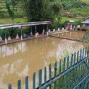 Kolam Pemancingan Jatinangor (Produktif) (27061475) di Kota Bandung