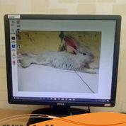 LCD Monitor Second Dell 19 Inci Square (27090687) di Kota Jakarta Utara