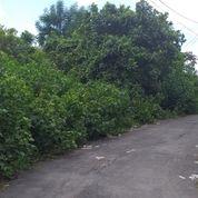 Tanah 1,65 Are, Jl. DEWATA Belakang SPBU Cargo Denpasar (27209107) di Kota Denpasar