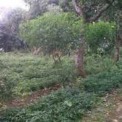 Invest Tanah Di Cisarua (27212059) di Kab. Bogor