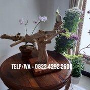 Tangkringan Kayu Kopi Buat Burung Falk Parkit Lovebird Dll (27213483) di Kota Surakarta
