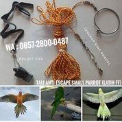 Satu Set Tali Latih Free Fly Dan Peluit Buat Nuri Betet Falk Lovebird Parkit Sunconure Dll (27213795) di Kab. Karanganyar