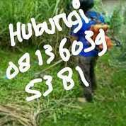 Jasa Potong Rumput Dan Pohon Area Kota Banda Aceh Hub 081360395381 (27229739) di Kota Banda Aceh