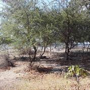 Tanah Murah Berlokasi Steragis Di Limung Desa Pungkit (27230647) di Kab. Sumbawa